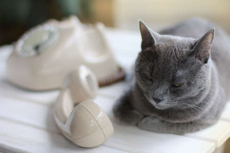 caller: Cat is located near the old phone, and is silent, lying next to the tube   silent caller with a mustache