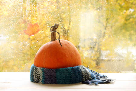 mellow orange pumpkin wrapped in a warm scarf on the background of drops after rain  autumn weather outside the window