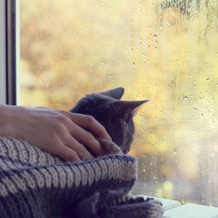 home comforts: man stroking a cat sitting in a warm blanket on the background wet from rain window  cozy meeting of the autumn season Stock Photo