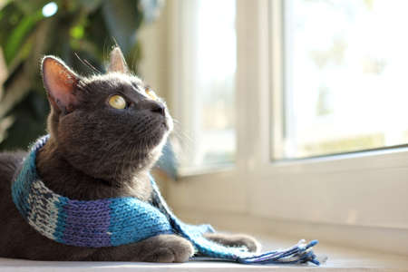 home comforts: house cat in a warm woolen scarf looking through a window  cozy vacation home