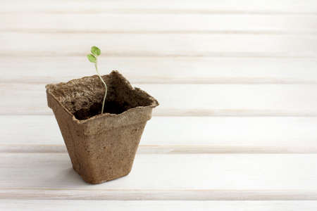 young plant, growing in cups for seedlings  beginning of a new life Stock Photo