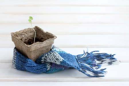 young plant care wrapped scarf warming  Green seedling in a cozy atmosphere Stock Photo