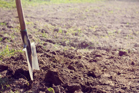weeds: Shovel sticking out in the ground, dug in the background of the field on a sunny day  spring preparing vegetable garden