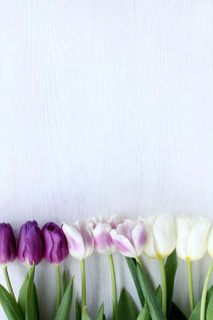 Tulips in lilac tones on a light wooden surface top view  spring floral background