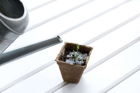Watering young seedlings from retro watering can  healing moisture for growth Stock Photo