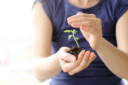 girl in a blue sweatshirt, holding a green sprout with the earth  careful shelter and care of seedlings