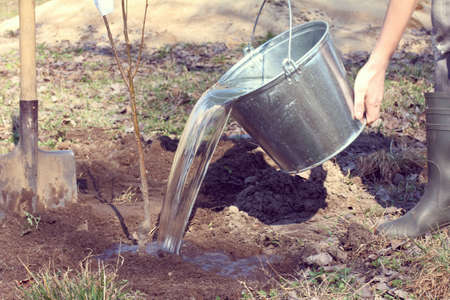 Water for watering a new tree pours out of a bucket / spring gardener works Foto de archivo