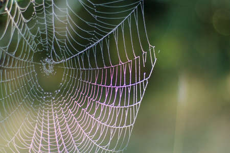 spider web with dew drops after a morning fog autumn forest network