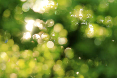 Light effects in the lumens of blurred green leaves   summer sun hares
