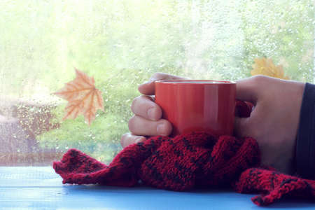 tea breaks: Hands holding a red mug wrapped in a scarf, in the background of a window with raindrops  warming atmosphere for consuming hot drinks