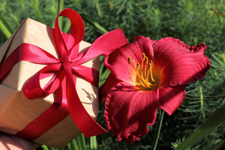 Gift with a red ribbon and a flower of the daylily  color matching kit Stock Photo