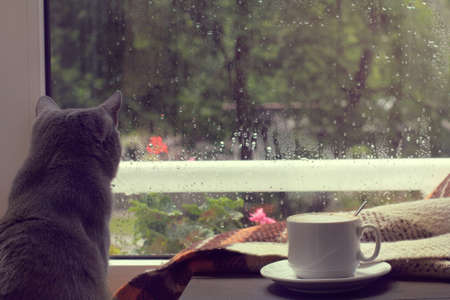 white mug of hot coffee with milk and cat, when behind is window is rain  warm home atmosphere
