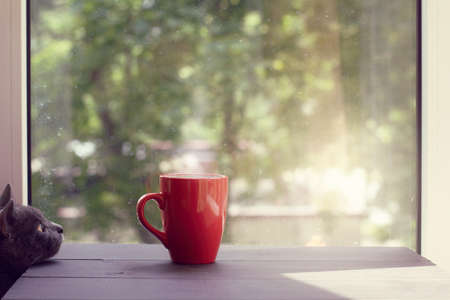 cat looking at the steaming drink in a red mug on a table against the window warm sunny home atmosphere Stock Photo
