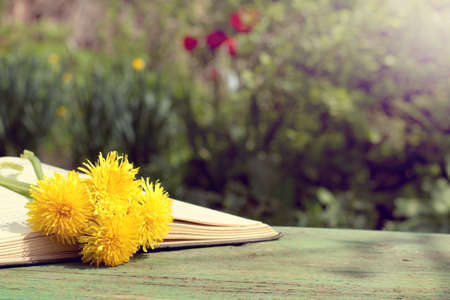 open book with a bookmark from a bouquet of flowers on a bench on a sunny day reading in the open air