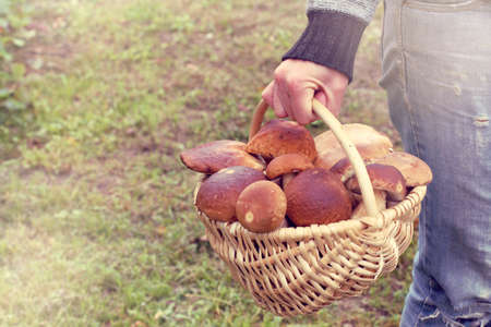 mushroomer carries in his hand a basket full of white mushrooms  best forest delicacies
