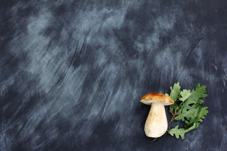 white mushroom boletus with oak leaves on a chalkboard a view from above  delicacy autumnal