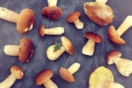 flat layout of freshly picked white mushrooms spread out on a dark chalkboard top view  autumn forest delicacies