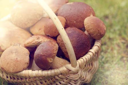 many edible mushrooms in a wicker basket  rich harvest boletus