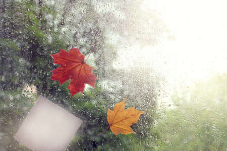 installation with patterned leaves on a window with drops after a rain  autumn mood has arrived