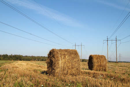high tech: round bales with straw lying on the field on a background of power lines and forests  autumn agricultural landscape