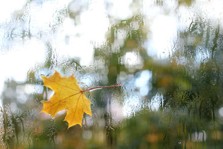 yellow maple leaf stuck to the wet after the rain window  autumn weather outside