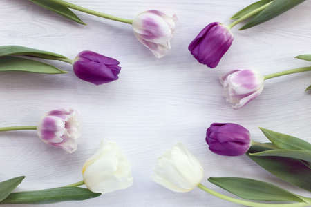 eight tulips arranged around a circle on a light wooden table / delicate floral frame