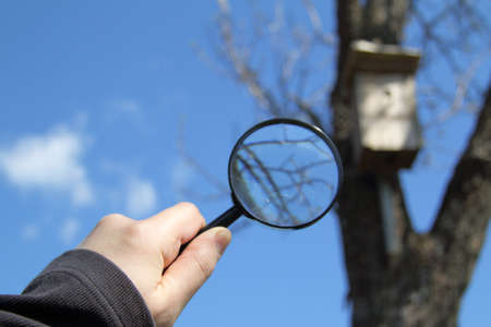 Hand with a magnifying glass on a background of a blurry tree silhouette with a birdhouse search for an advantageous place to stay