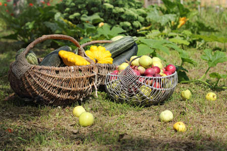 wicker retro basket with fruits and vegetables in the background of the garden  yielding sunny summer Reklamní fotografie