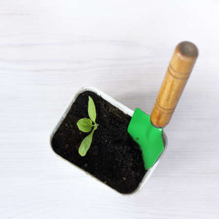 Little green sprout in a pot with garden shovel. Seedlings for spring planting