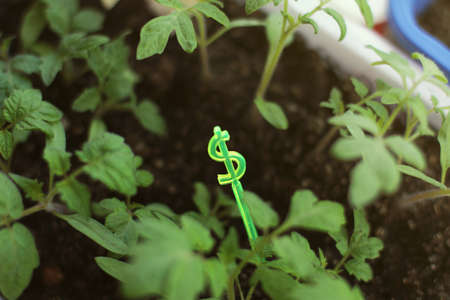 special expensive green seedlings in a pot. cash growth concept