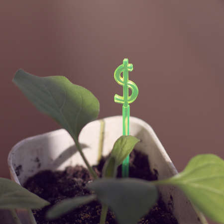 green sign denoting money grows from a pot with saplings of other plants. profit in the currency basket