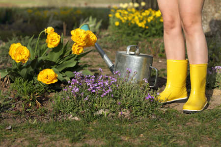 bare feet in rubber boots stand next to yellow tulips and a watering can in the garden. Day minimally dressed gardener Banco de Imagens