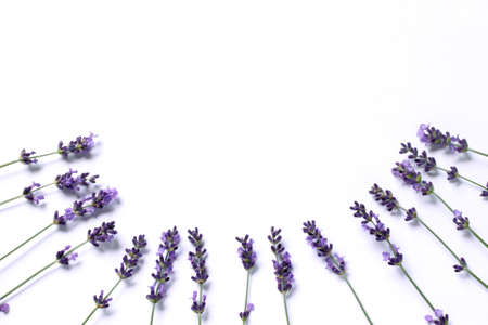 The sprigs of flowering lavender are located in a semicircle on a light background top view. a place for gentle wishes Stock Photo