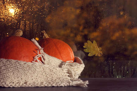 two small orange pumpkins wrapped in white scarf on a window background with raindrops. together warmer in the evening Reklamní fotografie