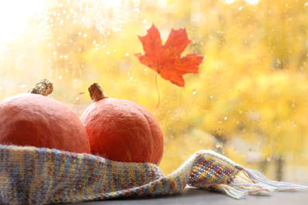 two small orange pumpkins wrapped in a scarf on a window background with raindrops in autumn. together in the house warm