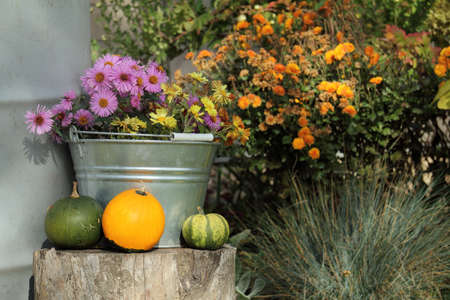 pink and yellow flowers in a bucket next to small pumpkins amid a flowerbed in the yard. autumn garden design Reklamní fotografie