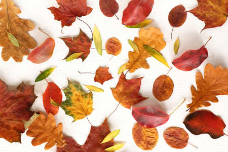 many different autumn fallen leaves on a light surface top view. colorful seasonal leaf