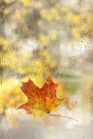 wet autumn maple leaf against the background of blurred silhouettes of trees. view from the window after the rain