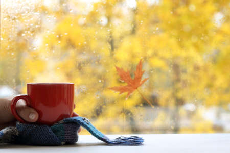Red cup with a blue scarf in hand against the background of a window on a rainy autumn day. time for a warm drink 免版税图像