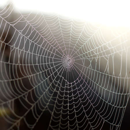 spider web with dew drops close up. wonders Wildlife
