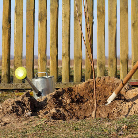 fruit tree seedling with a shovel and a watering can on the background of the fence. garden bookmark