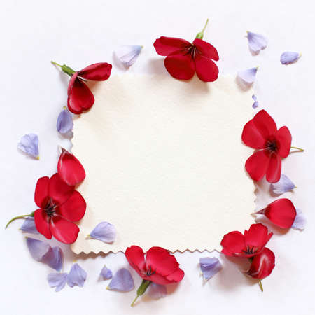 flat lay of flax petals and flowers on an empty bright surface. floral frame for inscriptions