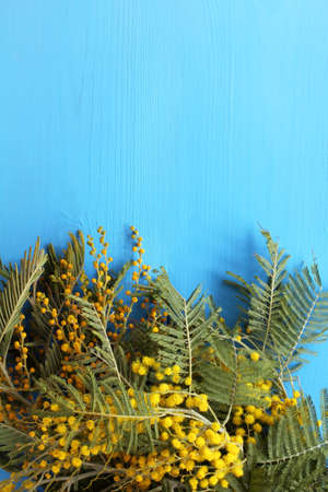 yellow flowers in a bouquet of mimosa on a blue wooden background. place for spring greetings