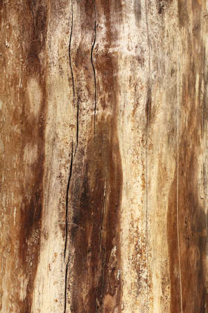 very old wooden surface. wood texture background