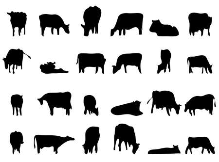 vector cattle silhouettes black on white background. different poses of grazing cows