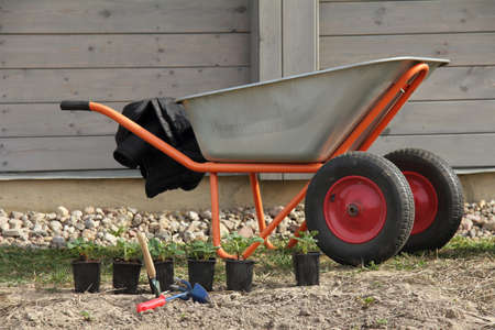strawberry seedlings, a shovel and a rake against the background of a garden wheelbarrow on a plot near the house. preparation for planting berry bushes Zdjęcie Seryjne