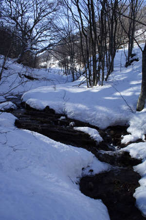 view of spring forest stream with snowcovered coasts Stock Photo - 817682