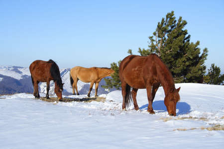 horse on pasture high at the mountains Stock Photo - 1236282