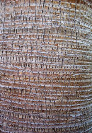 palm-tree bark texture close up photo