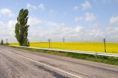 telegraph hill: road along the yellow field in bloom at sunny day